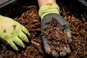 Compost Giveaway in Palos Verdes Estates - Athens Services - Composting - Athens in the news - Community Services
