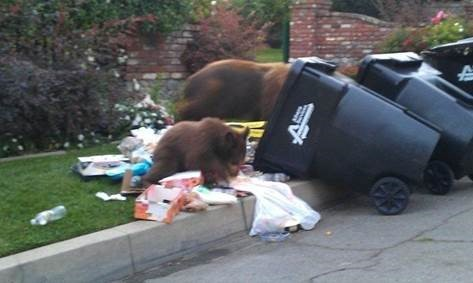 How to Stop Bears from Trashing Your Home or Campsite